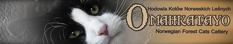 Koty norweskie le�ne. Strona hodowli Omahkatayo*PL